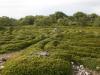 Labyrinth-Haseninsel
